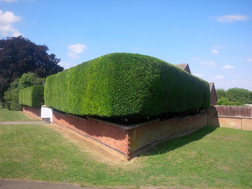 Our Hedge